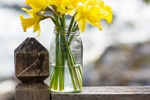 Daffodil flowers in jar