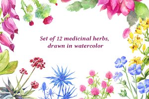 12 watercolor herbs isolated