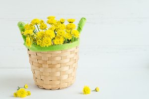 Still life Chrysanthemum yellow flowers