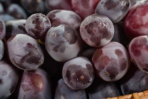 Closeup of purple grapes
