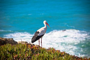 Stork on a Cliff