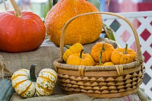 Basket of pumpkins with squash