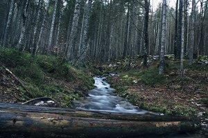 Forest torrent