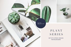 Plant series stock photos