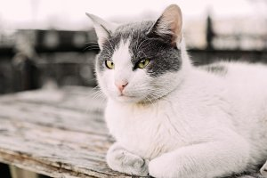 Portrait of white cat outdoors