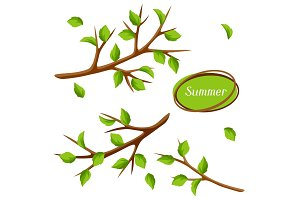 Summer set with branches of tree and green leaves. Seasonal illustration