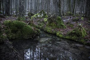 A spring in the forest