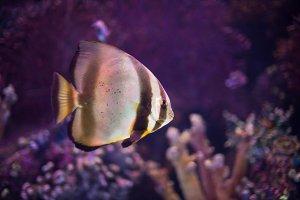 Tropical sea fish in aquarium