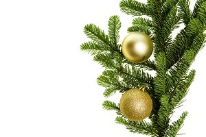 Noble fir bough with gold ornaments