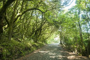 lush forest of the Gomera