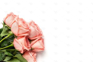 Pink roses stock photography #5589