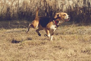 dog_running.jpg