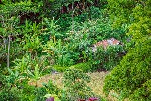 Hut in Tale between lush green banana trees in Sidemen, Bali, Indonesia