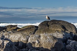 Rock on the coast with sea gull watching