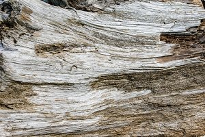 Textured surface of large piece of driftwood