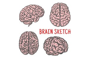 Human brain organ vector sketch icon