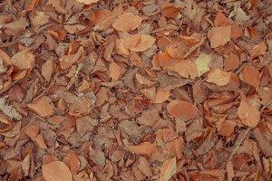 Autumn Leaves Texture II