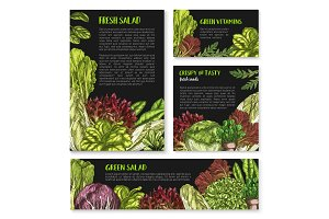 Salads and leafy lettuce vector templates posters