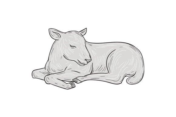 Lamb Sleeping Drawing