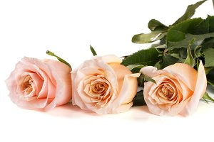 three fresh beige roses isolated on white background