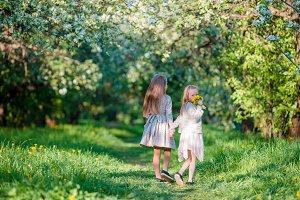 Adorable little girls on spring day outdoors walk in apple garden