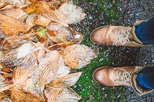 Wet Beauty of Fall