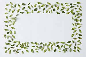 Green leaves and white background