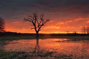 Sunrise over flooded