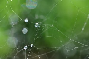 Spider Web Rain