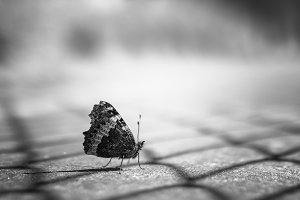 Butterfly on floor