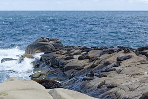 Sea Lions of Cabo Polonio