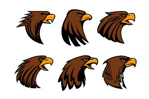 Sport team eagle or hawk bird head vecor mascot