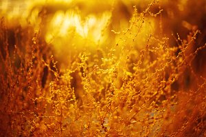 Natural golden background