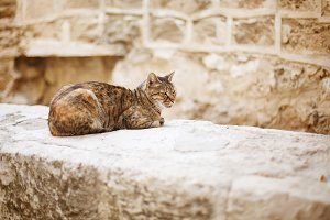 Wild city cat sitting on a stone