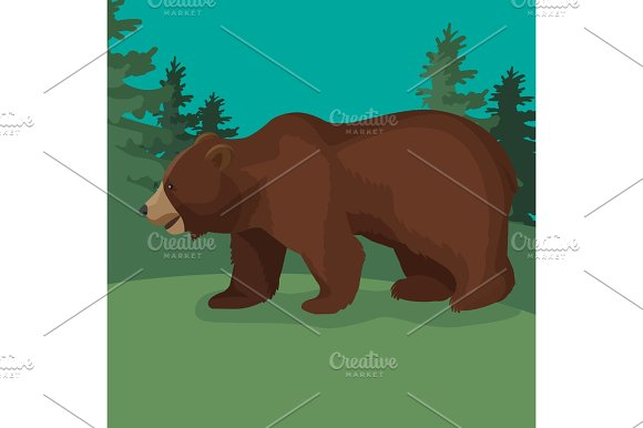 Large Brown Bear Side View Close-up Walking In Green Wood