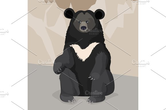 Formosan Or American Black Bear With White Collar Sitting Close-up