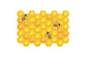 Bee on honeycombs isolated on white background. Organic honey vector