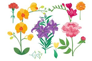 Cartoon petal vintage floral vector summer floral greeting card spring blossom.