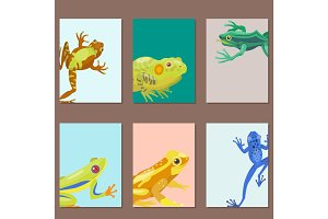 Frog cartoon tropical animal cartoon nature cards vector illustration.