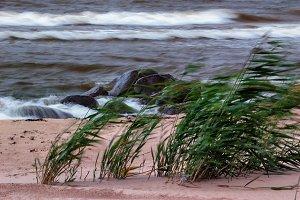 The wind on the beach