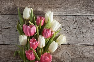 Spot on for tulips! Photo