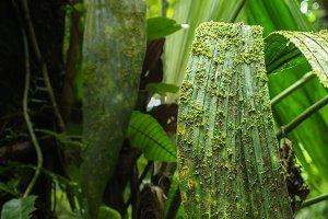 Fern overgrown by green moss