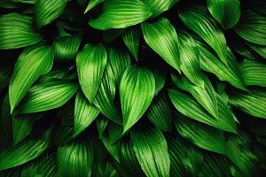 Greenery background made of fresh green leaves.