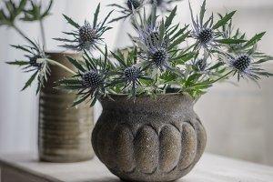 Sea Holly (Eryngium Sapphire Blue)
