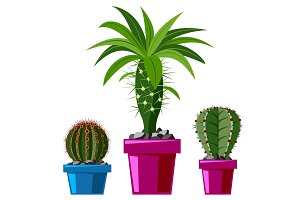 Cactus flat style nature desert flower green cartoon drawing graphic mexican succulent and tropical plant garden art cacti floral vector illustration.