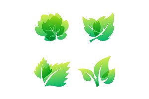 Green leaf eco design friendly nature elegance symbol and natural element ecology organic vector illustration.