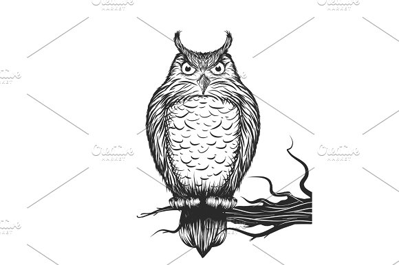 Owl Is Sitting On The Branch