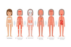 Woman Anatomy System and Structure of Human Body