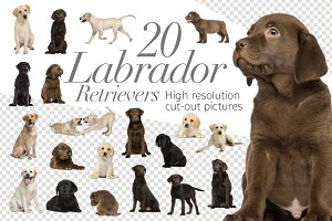 20 Labrador Retriever - Cut-out Pics