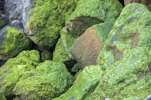stones with moss
